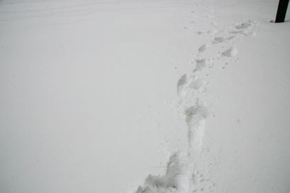 SnowFootprint.jpg