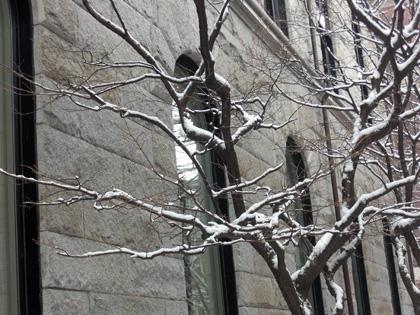 SnowFrostenTree.jpg
