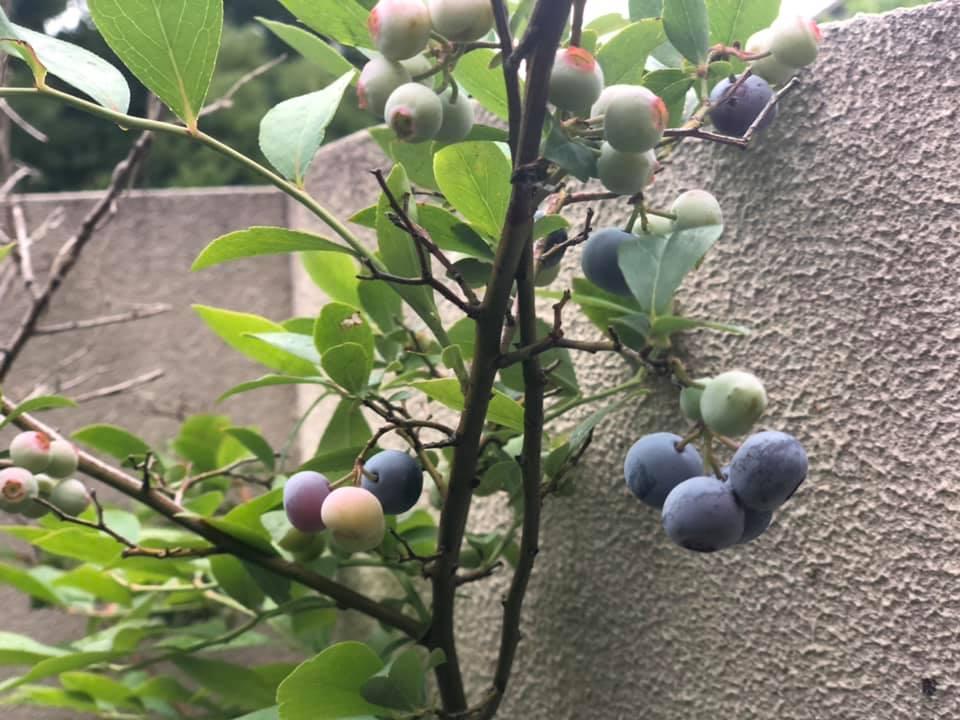 harvest11.jpg