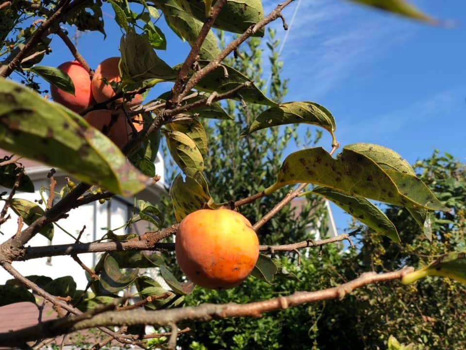 harvest14.jpg