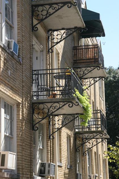 Savannah5.jpg