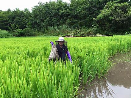 Rice4.jpg