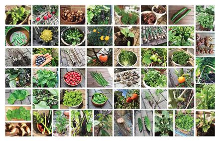 garden2016_440.jpg